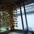 吊るし柿作り