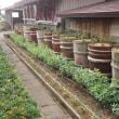 花壇定植 H30-07-11 ㈬ 曇