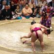 平成30年大相撲5月場所 応援観戦