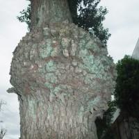 台風被害・倒木