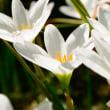 今、庭に咲いている花