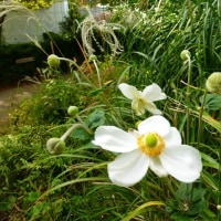 秋の東山植物園 ・・・ 名古屋市