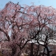 西林寺4月4日