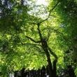 緑陰に老いの二人の睦まじく