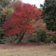 花貫渓谷の紅葉を見に!