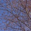 さわやか信州紀行 in Winter ~1.諏訪湖~