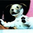 新型ロボット犬「aibo」 購入者にもソニーにもありだと思います!