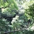 4年ぶりの高尾山