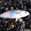 10月10日は魚魚(とと)の日