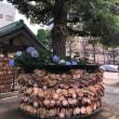 浅草に行ったので今戸神社へ