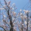 顕彰会による本覚大師法要と梅の花
