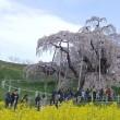 満開の滝桜と「福島・花めぐり」