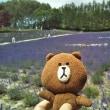 でっかいどう。北海道 8日目 ラベンダー&サクランボ