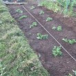 トマト植える