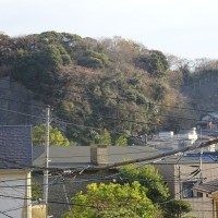 桜の開花の一足さきに、観て撮って鎌倉、うたって語って桜木町…