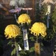 羽生市連合菊花大会へ