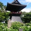 行田の吉田さん宅へ出掛ける。能護寺のアジサイを見に行く。