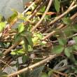 GICLイングリッシュガーデンの宿根草