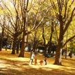 めらあやきな秋の代々木公園