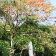 サイパンは「沖縄の十月」が続く「常夏の島」