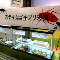 <橿原市昆虫館> ギョ! 新館に「ステキなゴキブリ天国!」