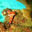 10月20日(土)今日も晴天!凪!【ひらばえ】ここの珊瑚は、今日も元気!魚たちの楽園です!