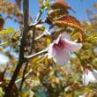 花の高妻山