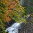 2469 滝の横顔