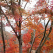別府・黒川温泉と錦秋の九州紅葉美の旅② 湯布院、九重夢大吊橋、大観峰へ(大分・熊本)(後半)