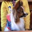 ペットランドミクニ&「+dog」でランチ♡