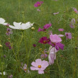 走って歩いて萩の花を見て