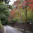 宇治川沿いの紅葉