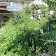 132東京の芭蕉句碑巡り-6(江東区ー3)