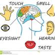 """人類の第2次低脳化現象  (1)人類は過去に一度 """"低脳化""""  している"""