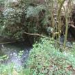 清流 払沢の滝へ