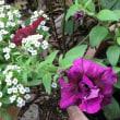 今朝の庭…2