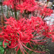 🌸秋の花🌸