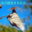 お話「成虫で越冬する昆虫」 小3へ!