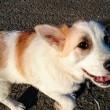 しおんの会:保護子犬フランとシスコが卒業しました