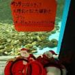クリスマス気分を味わおう☆彡