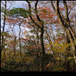 晩秋の井原山