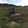 デュラム小麦の播種