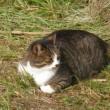 😸巨大猫再来…多摩川猫シリーズ