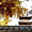 東照宮の紅葉 (4705)