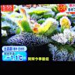 10/23 Jchan 冬の朝 2