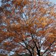 グリーンピア春日井の紅葉 その3