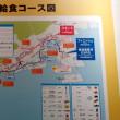 神戸マラソンにひまわりを13