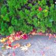 カルマ解消㊿のお花を流しました。