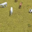 牛と馬がいる風景