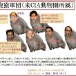 転載: 安倍マイノリティー対日侵略政権が、日本を「ダンス漬け」にしようと企んでいると危惧します。